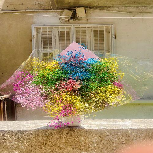 זר גיפסנית בצבעים