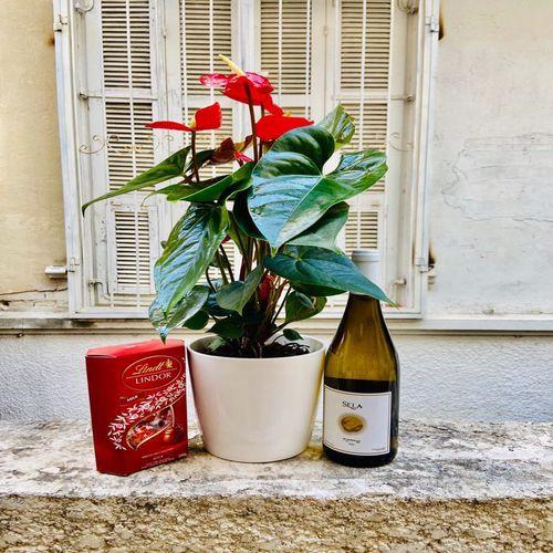 חבילת עציץ יין ושוקולד