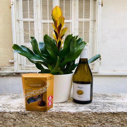 עציץ יין ושוקולד למתנה