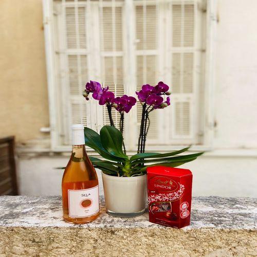 סחלב מיני 2 ענפים יין ושוקולד