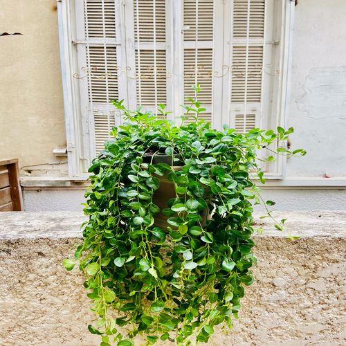 עציץ ירוק נישפך