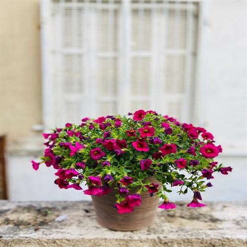 פרחי עונה בכלי